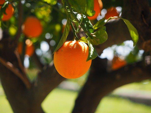 Tratamiento mosca de la fruta