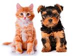 Animals/mascotes